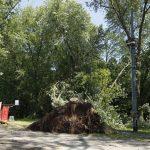 Zniszczona sieć i zasypane drzewami torowisko w kierunku krańcówki.